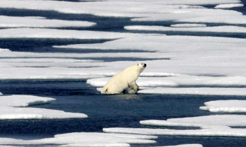 A polar bear in the Canadian Arctic archipelago: Countries can fight climate change and keep warming below 1.5C if they take immediate measures, says the leaked UN draft report.