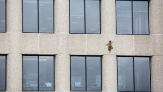 A raccoon is pictured scaling the side of a high-rise building - with splayed arms