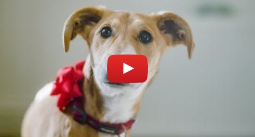 Youtube post by Dogs Trust: Festive ad with a difference 🐶🎄 A dog is for life, not just for Christmas® | Dogs Trust