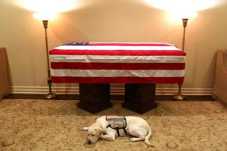 Sully the dog sleeps next to the casket of the late US President George HW Bush