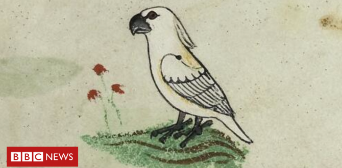 Cockatoo known in 13th Century European book
