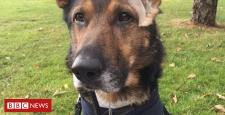 Finn's regulation: Michael Gove backs police canine campaign