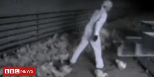 Kent gangmasters in Lithuanian court docket over hen catchers