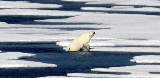 Leaked UN draft record warns of urgent need to reduce global warming