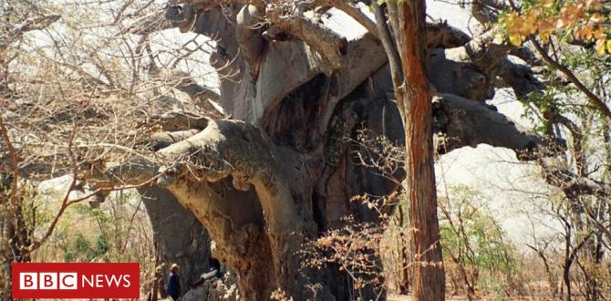 Scientists shocked by mysterious deaths of ancient timber