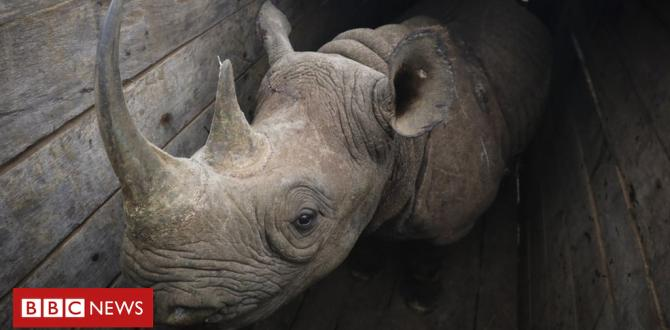 Black rhinos: Tsavo East Kenya reserve sees some other die