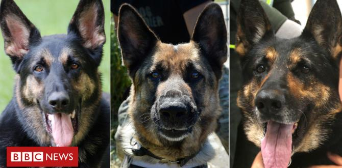 Colombia's sniffer canine and other centered prized animals