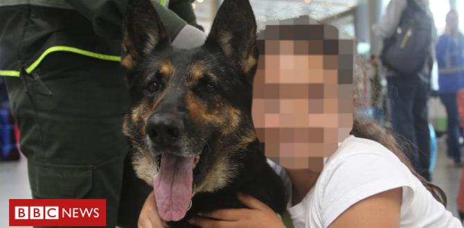 Colombian sniffer dog moved after threats by means of drug gang