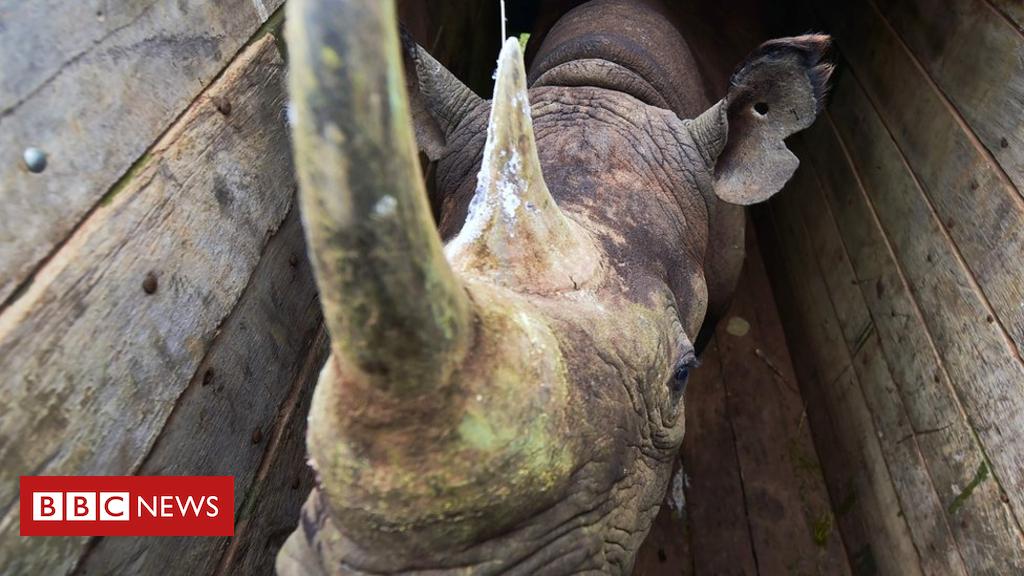 Endangered black rhinos die in Kenya reserve