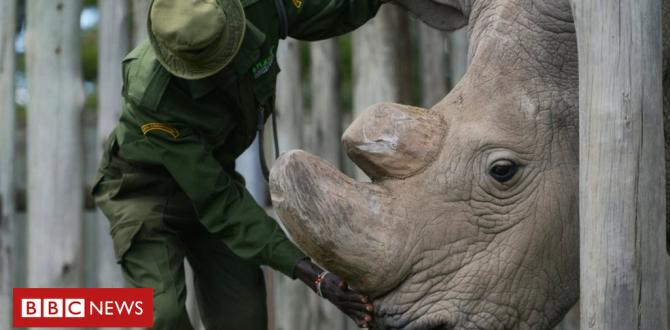 Rhino dies: Sudan was once the ultimate male northern white