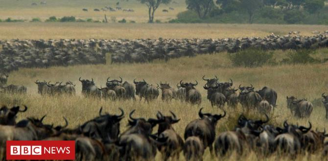 Tanzania and Kenya row over lengthen to wildebeest migration