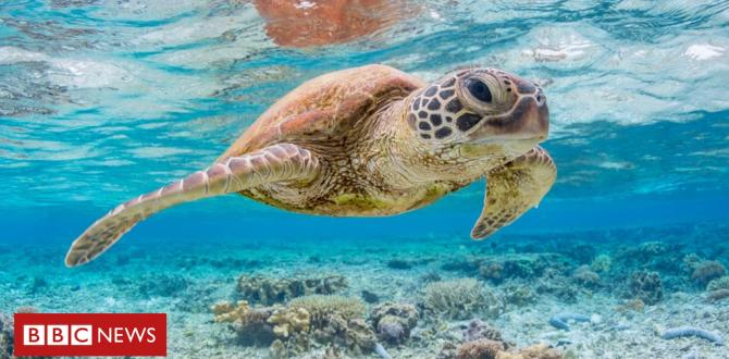 'A single piece of plastic' can kill sea turtles, says study Ask a question