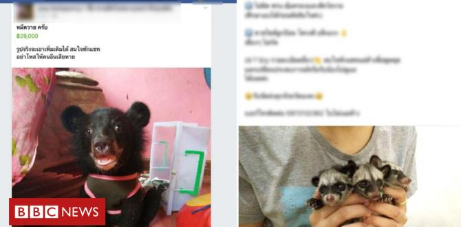 Fb animal industry uncovered in Thailand