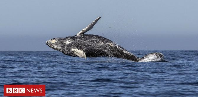 Pro-whaling nations block plan to create sanctuary