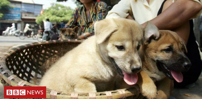 Vietnamese capital Hanoi asks people not to eat dog meat