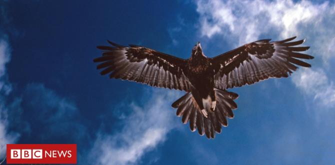 Wedge-tailed eagle 'mass poisoning' prompts Australia arrest