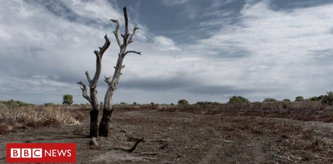 Australia drought: How so much rain may end 'the massive dry'?