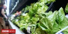 E. coli outbreak: Romaine lettuce probed in US and Canada