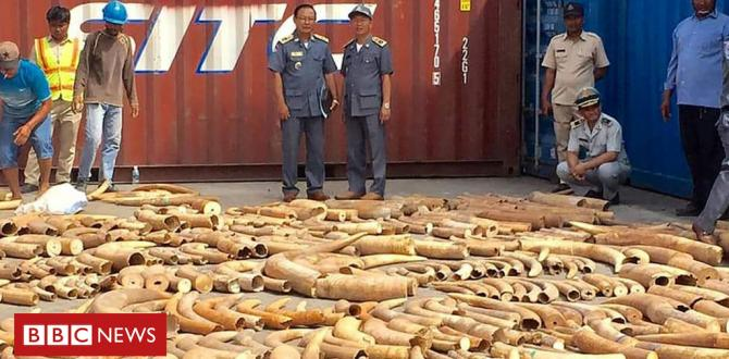 Cambodia makes document breaking ivory haul at port
