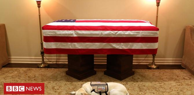 George HW Bush's carrier canine Sully can pay touching final tribute