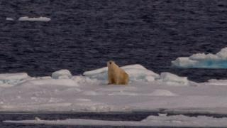 Local Weather amendment: Arctic reindeer numbers crash by half