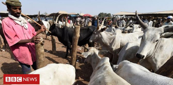 Pretend information and Nigeria's herder drawback