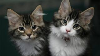 Puppy and kitten sales at puppy shops set to be banned