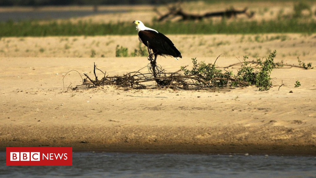 Tanzania dam: Power plant planned in Selous Game Reserve